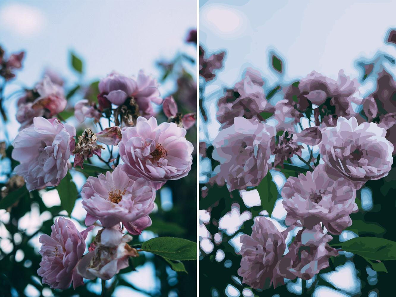 Två bilder på samma blommor, en bild är ett foto och en bild är en vektorisering av blommorna